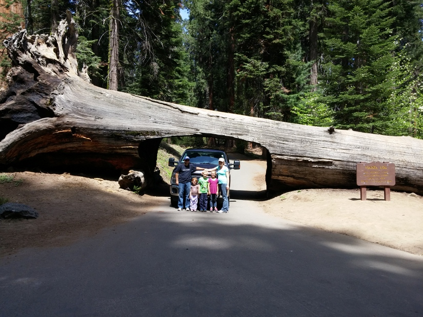 The Biggest Tree on Earth
