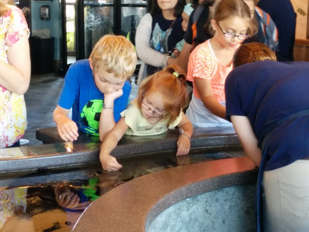 Touch pools at the aquarium